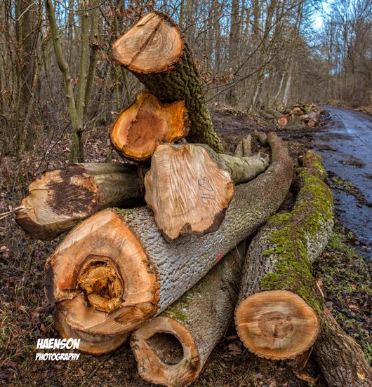 Waldspaziergang-in-Kitzinger-Fluren-Holzwirtschaft