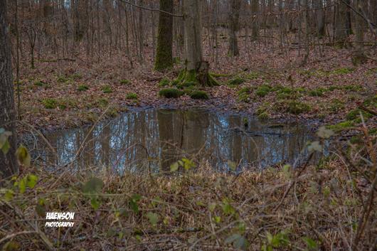 Waldspaziergang-in-Kitzinger-Fluren-kleine--Pfütze