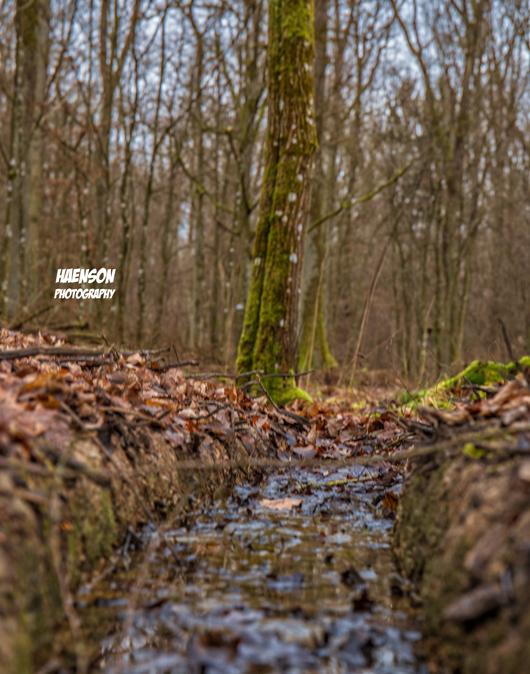 Waldspaziergang-in-Kitzinger-Fluren-kleines-Bächlein
