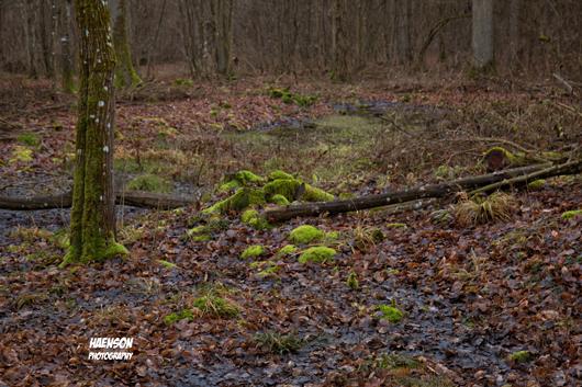 Waldspaziergang-in-Kitzinger-Fluren-kleines-bemooste-Baumstümpfe