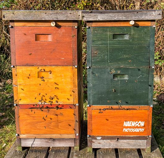 Bienen-Kitzingen-Gartenschaugelände