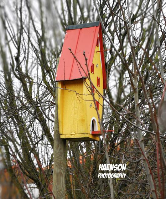 Spaziergang-durch-Kaltensonheims-Fluren-vogelhaus
