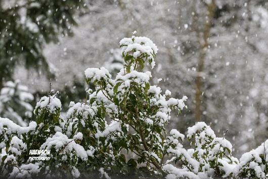 Winter-ist-zurück