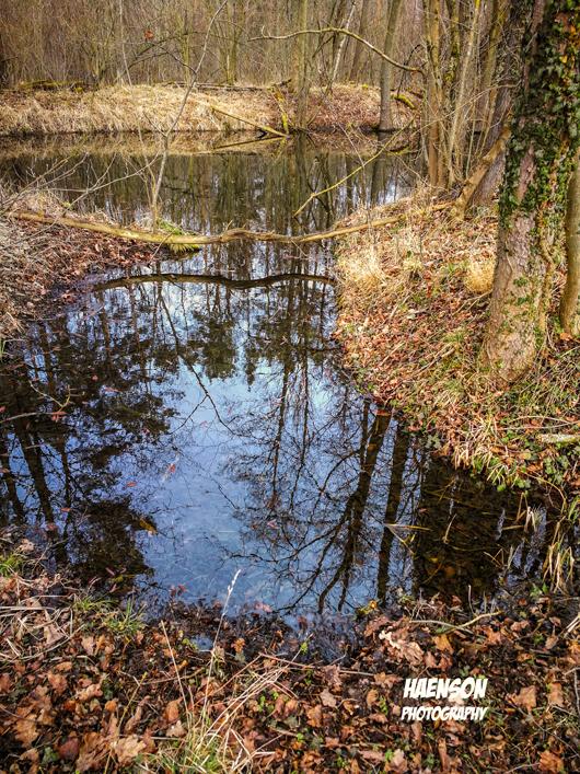 Überschwemmung-im-Klosterforst-2