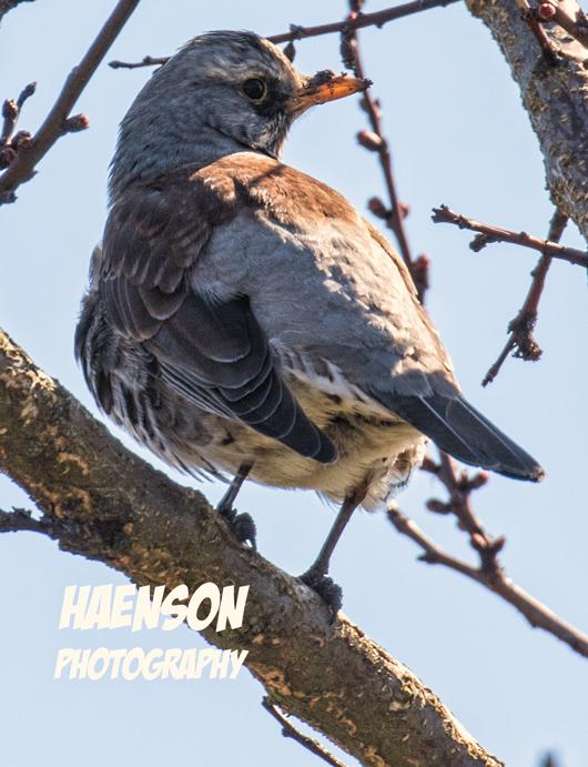 Vogelkunde-3
