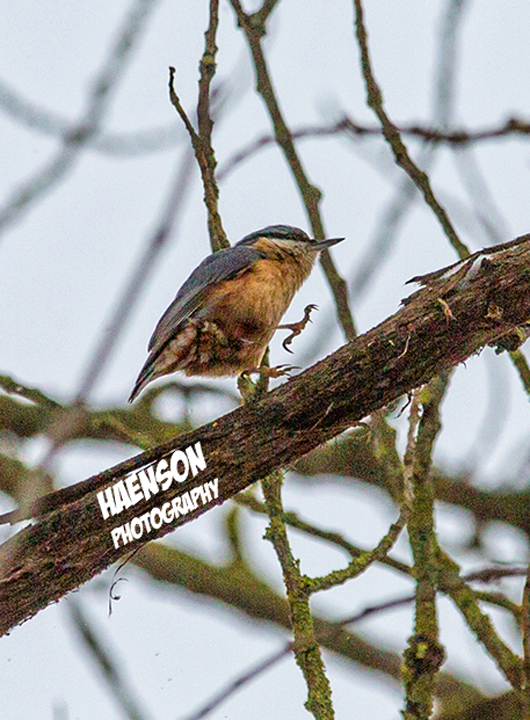 Winter-ist-zurück-Mitte-März-2018-Singvogel-im-Baum
