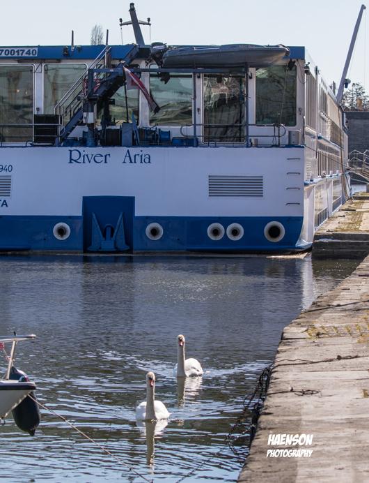 schwäne-und-Kreuzfahrtschiff